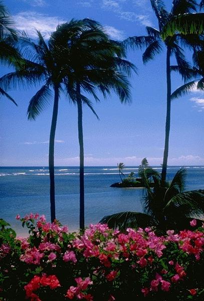 L'île d'Hawaï, le paradis sur terre est Américain !